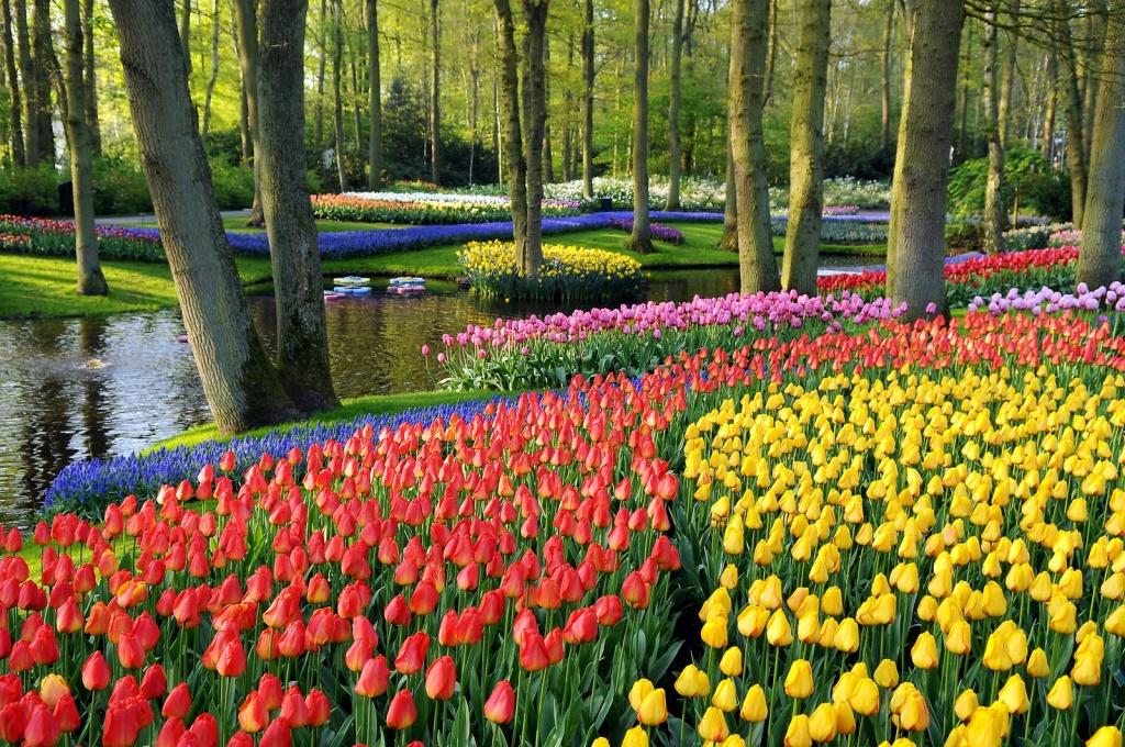Amsterdam Gezilecek Yerler Seyahat Rehberi
